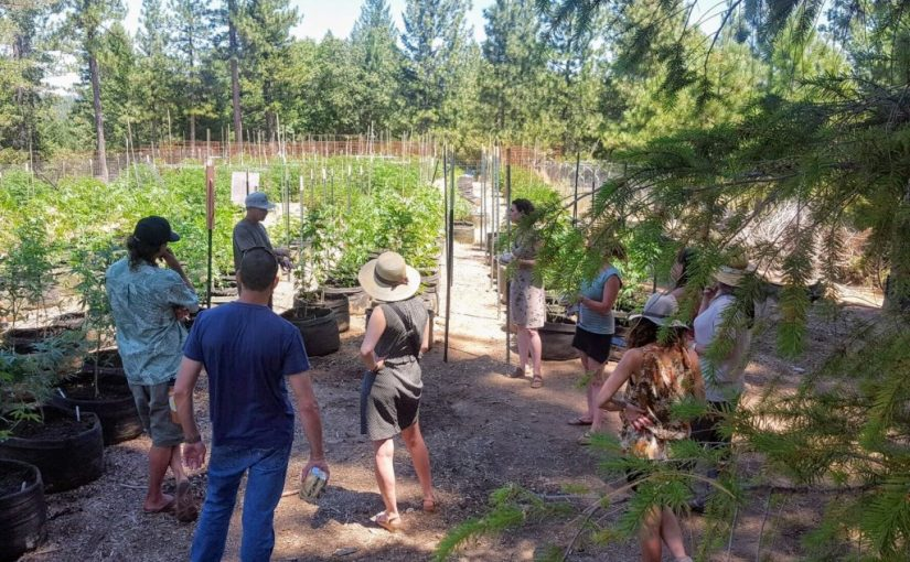 Israeli farmers visit Nevada County to learn about its cannabis culture